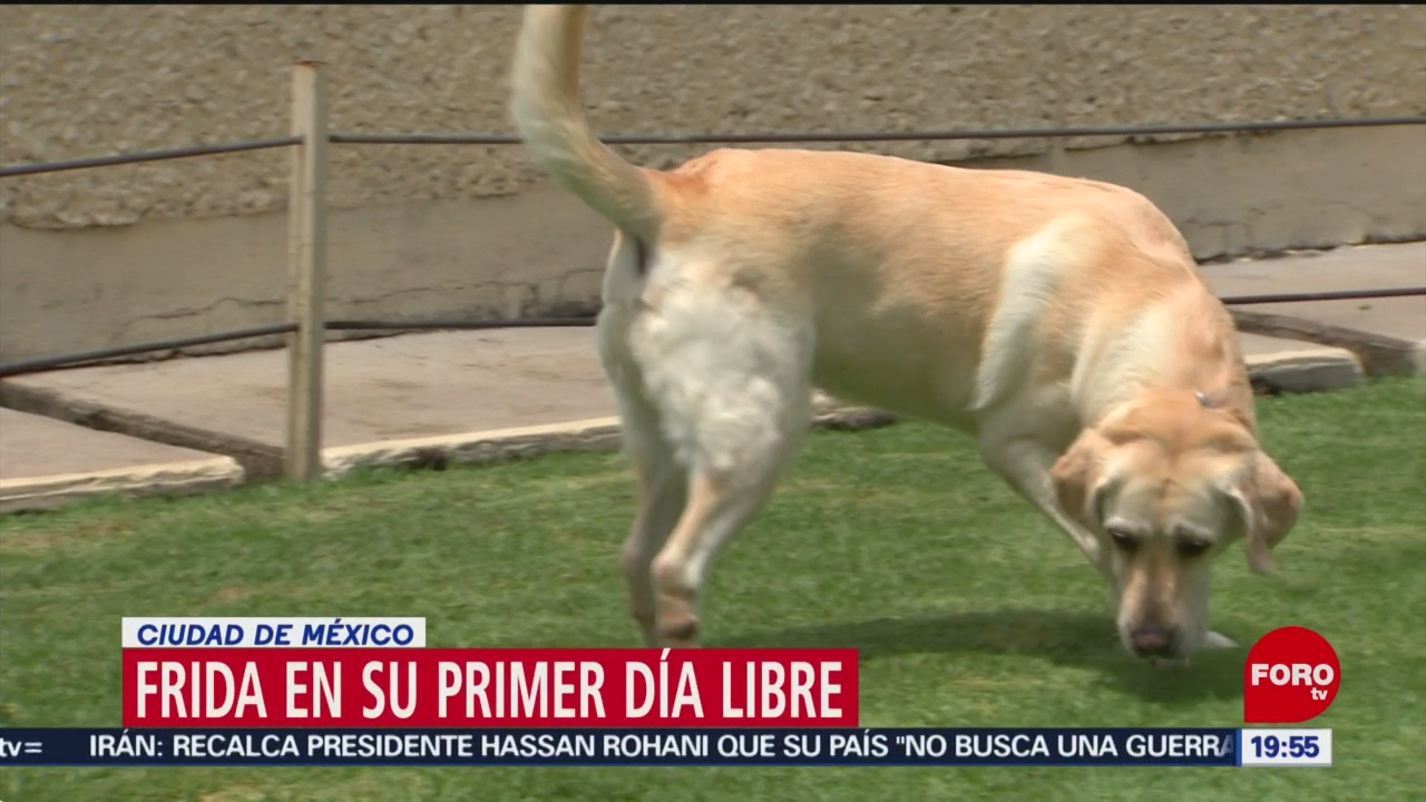 Foto: Perrita Frida Día Jubilación 25 Junio 2019