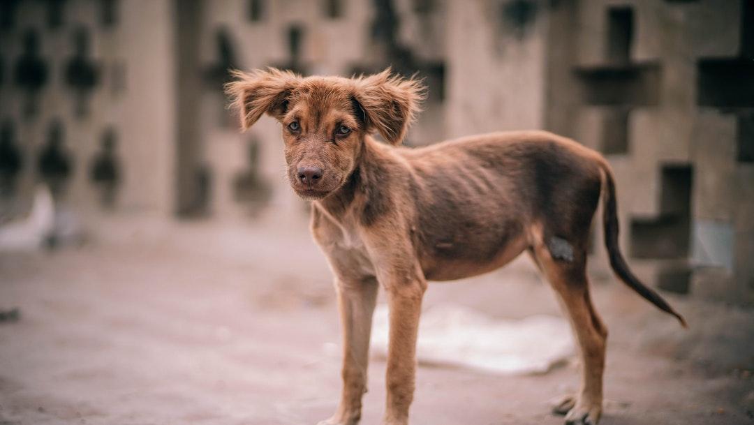 Foto: Ma-Toi es el nombre del perrito quemado con asfalto hirviendo. 15 de julio 2019