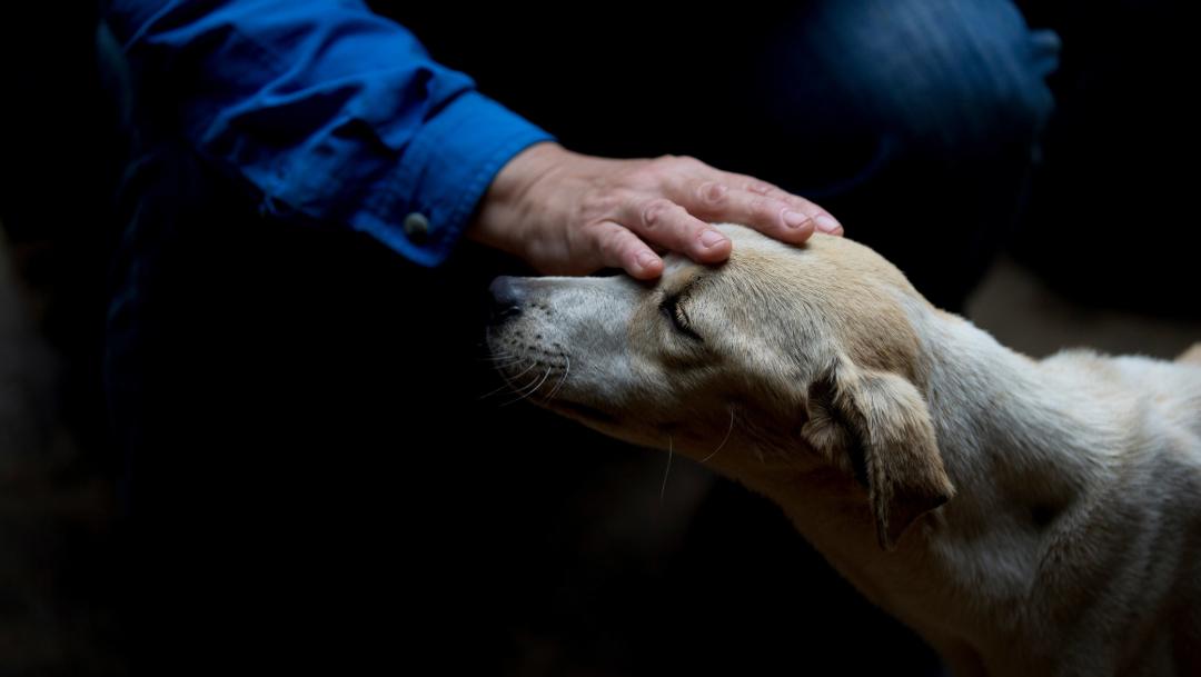acariciar perros