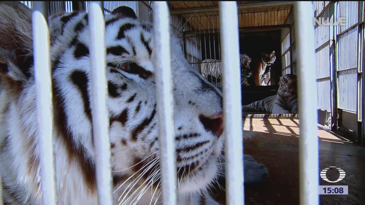Foto: Dónde están animales exhibidos en circos