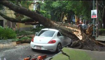 Foto: Un enorme árbol cayó sobre un automóvil en la colonia Condesa, 20 julio 2019