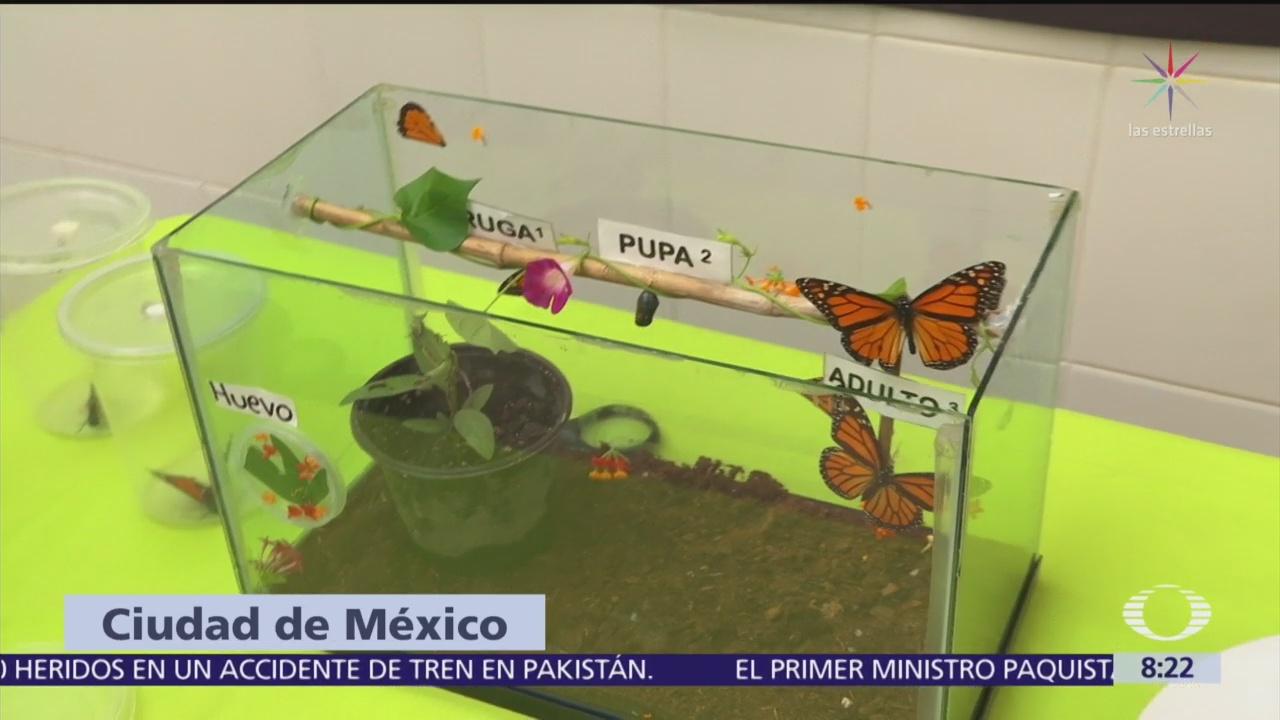 Mariposas Monarca en el zoológico de Chapultepec