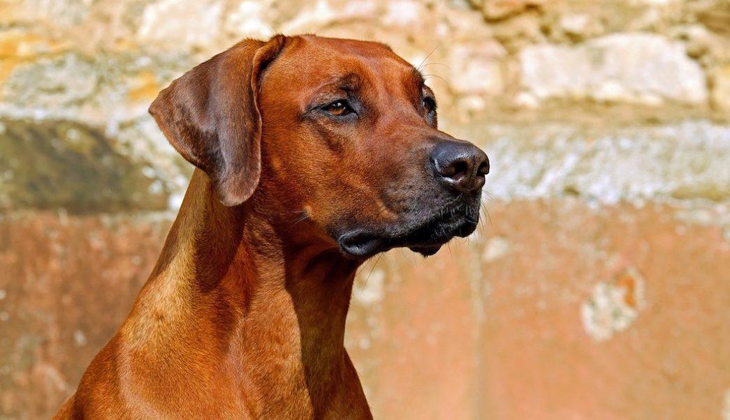 Bebe-abandonado-perros-callejeros-drenaje-India
