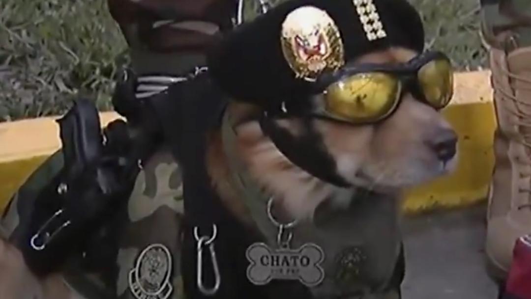 agente-canino-perro-policia-desfile-militar-Peru