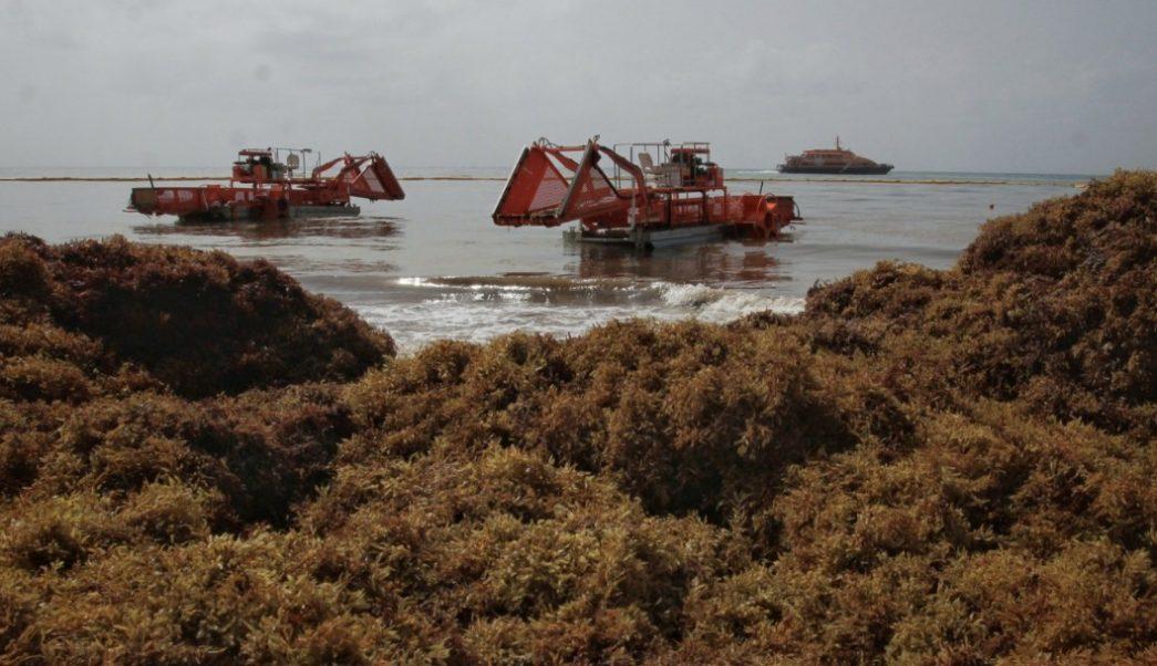 Foto: Vista de las dragas empleadas para recoger el sargazo que llega a diario en Playa del Carmen, en Quintana Roo, el 28 de julio de 2019 (EFE)