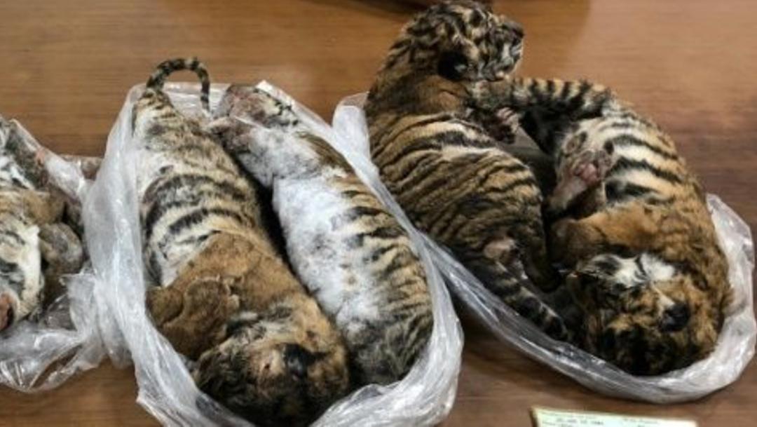 tigres congelados vietnam (1)