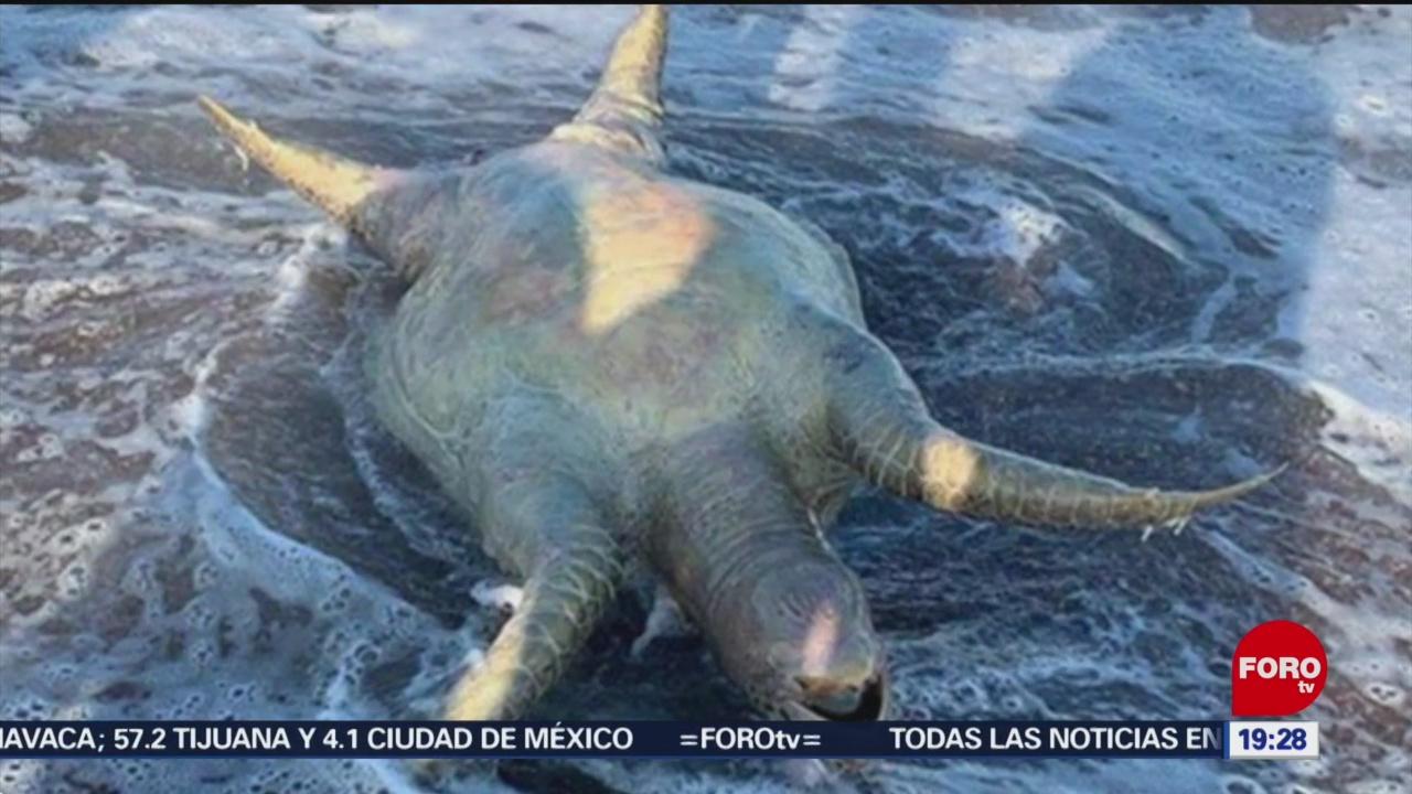 Foto: Derrame Ácido Hallan Animales Muertos Mar De Cortés 15 Julio 2019