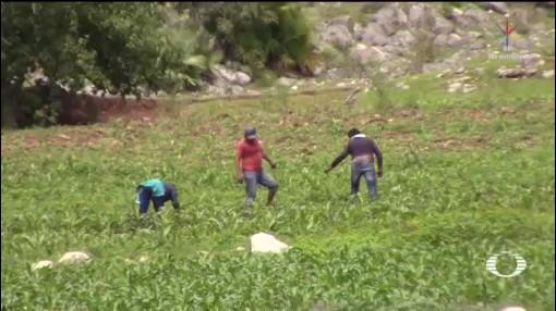 Foto: Amlo Asegura Aumentará Producción Fertilizantes 9 Agosto 2019