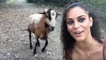 Foto Cabra embiste a joven que se quería tomar una selfie con ella 19 agosto 2019