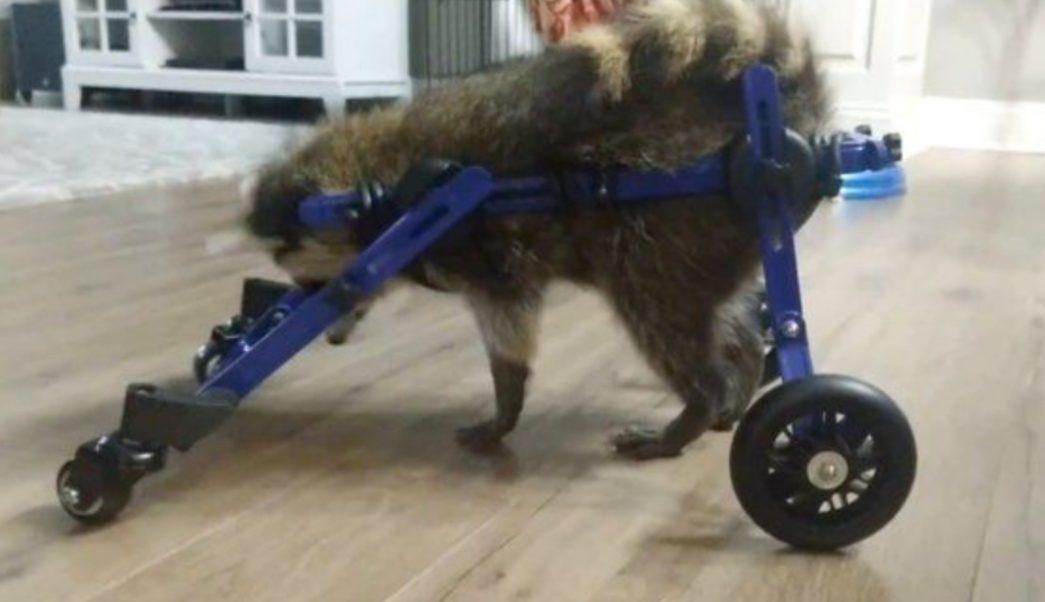 Foto: La compañía dijo que es poco probable que el animal se recupere por completo, 13 de agosto de 2019 (Twitter @ArkansasOnline)