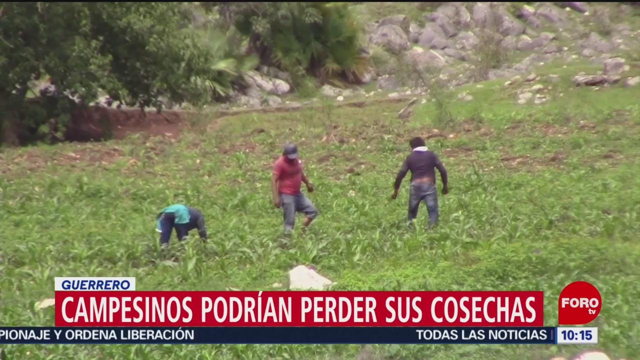 FOTO: Campesinos de Guerrero podrían perder sus cosechas por falta de fertilizantes, 10 Agosto 2019
