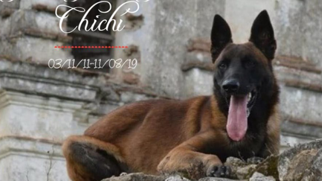 Perros Rescatistas, Chichí Perro Rescatista, Perro Rescatista Muere En México, Perro Rescatista México, Chichi Perrito Rescatista