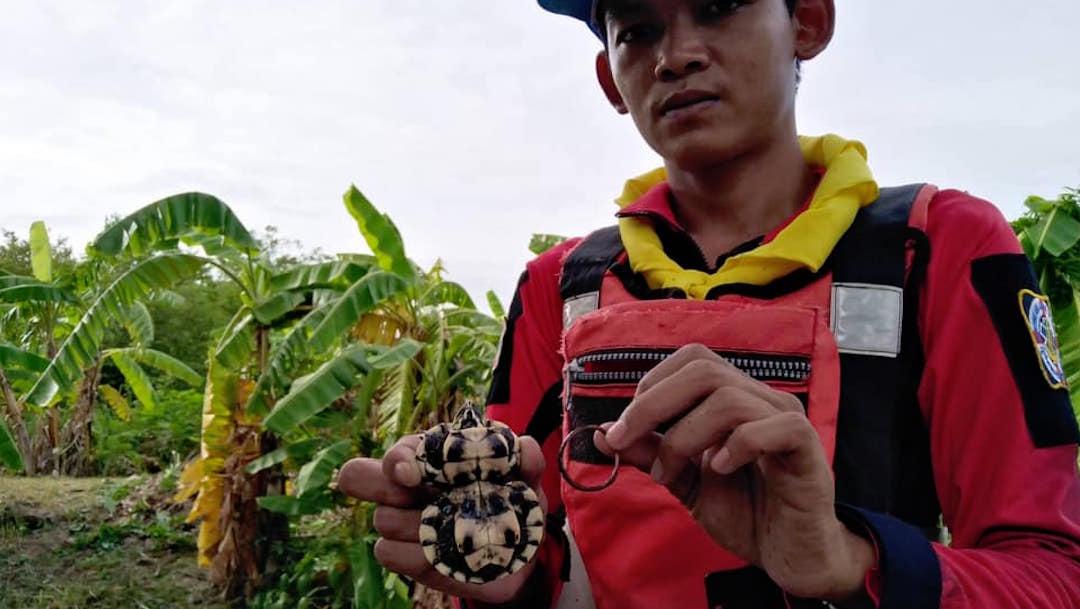 Foto Tortuga crece con forma de número ocho por aro de caucho en el caparazón 28 agosto 2019