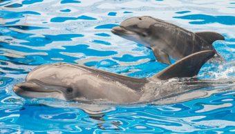 Delfines nariz de botella.
