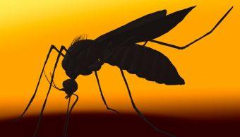 Cambio climático, determinante en casos de dengue a nivel mundial