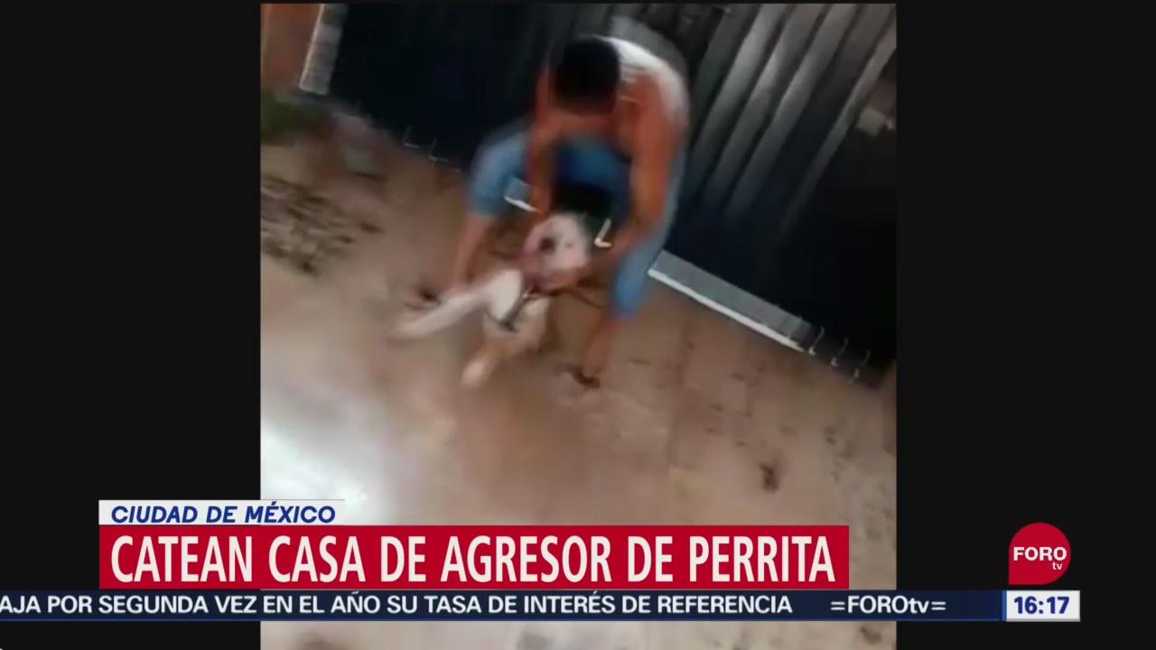 FOTO: Todo Que Sabemos Caso Perrita Maltratada Santa Marta