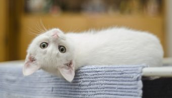 Foto:gatos empaticos se preocupan por humanos. 24 Septiembre 2019