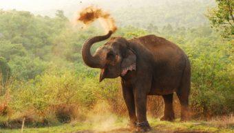 Imagen: Los elefantes se encontraron en la reserva forestal cercana a Sigiriya, un sitio arqueológico con ruinas y uno de los destinos turísticos más populares del país, 30 de septiembre de 2019 (Getty Images, archivo)