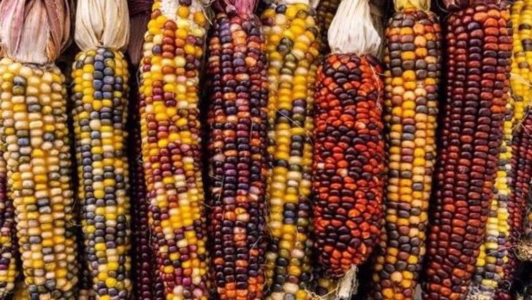 México puede producir alimentos sin destruir el medio ambiente: Conacyt