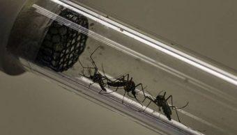 Pese a brote de dengue en Jalisco, habitantes no permiten que autoridades fumiguen