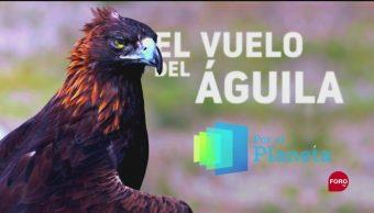 FOTO: Por el planeta: El vuelo del águila, 29 septiembre 2019