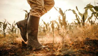Sequías afectan a más de 30 mil hectáreas de cultivo en Altamira, Tamaulipas