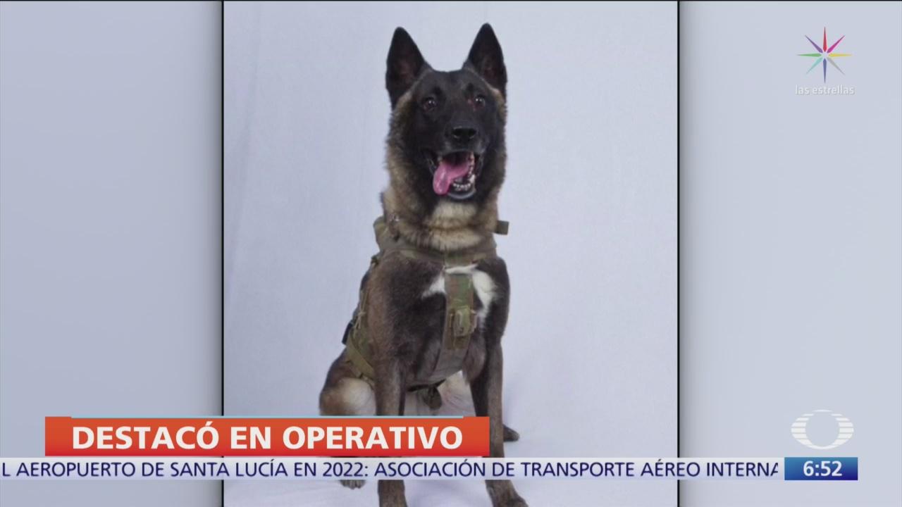 Consideran a un perro como héroe de operativo contra Al-Baghdadi
