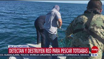 FOTO: Destruyen red para pescar totoabas Baja California,