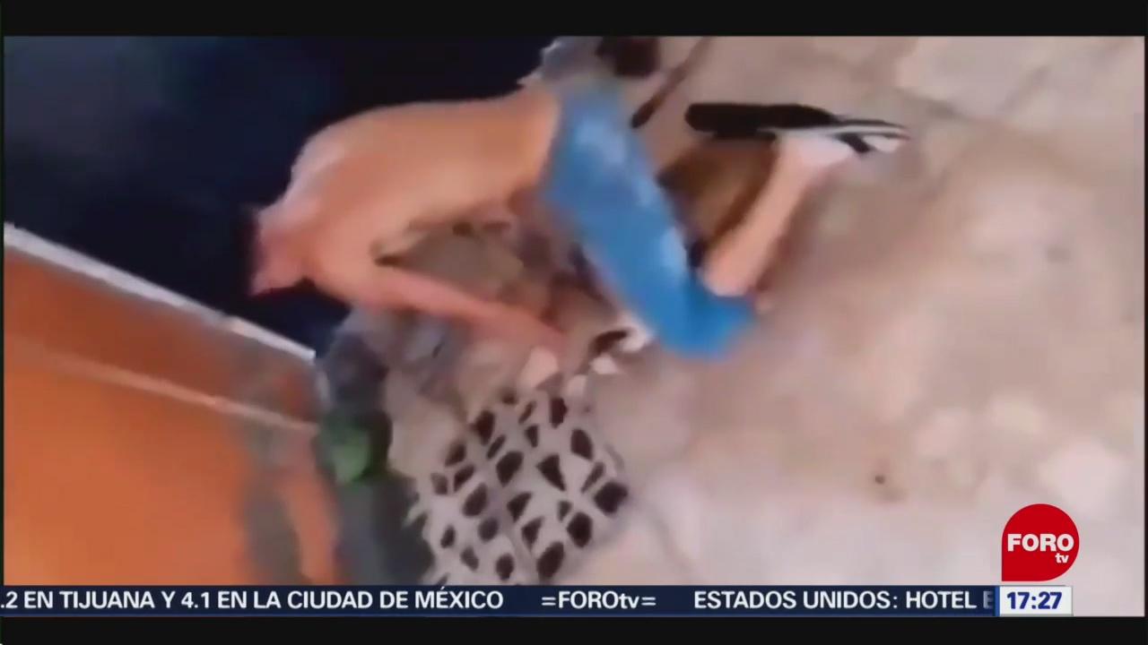 FOTO: Detiene Hombre Que Maltrató Perro