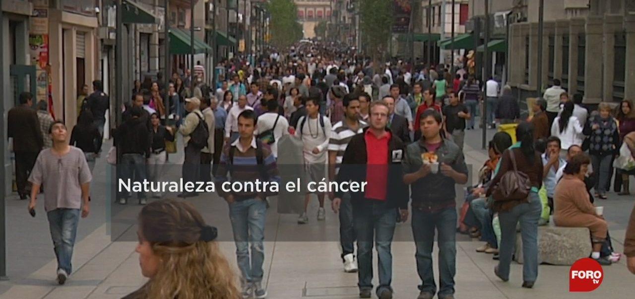 FOTO: El árnica podría ayudar a combatir el cáncer de colon, 19 octubre 2019