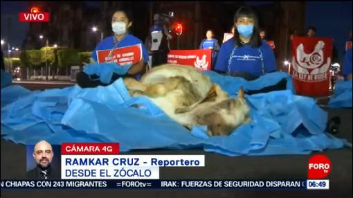 Jóvenes protestan por los derechos de los animales en CDMX