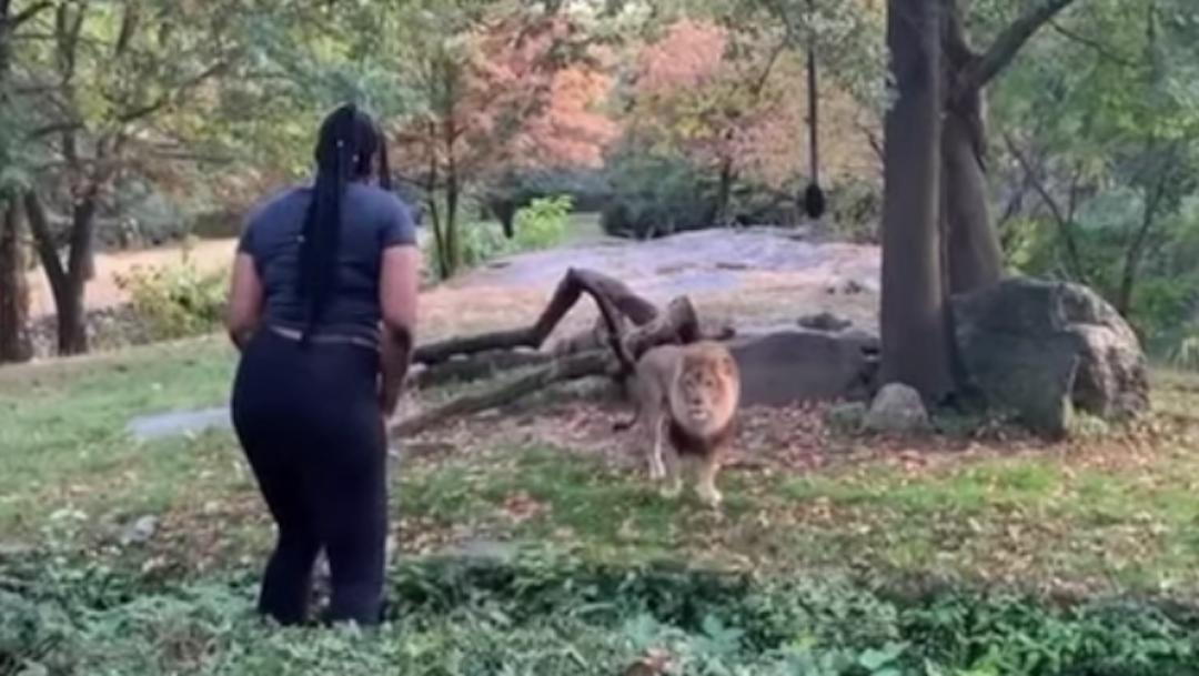 Foto Mujer entra a fosa de león en zoológico y lo reta bailando 4 octubre 2019