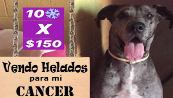 Foto Perrito vende helados para pagar su tratamiento contra el cáncer 17 octubre 2019