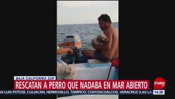 FOTO: Video Pescadores Rescatan Perro Mar Abierto