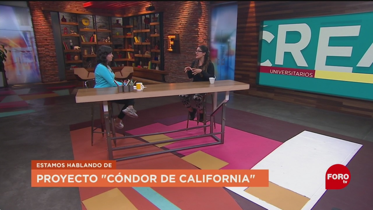 FOTO: Proyecto 'cóndor de California ', 27 octubre 2019