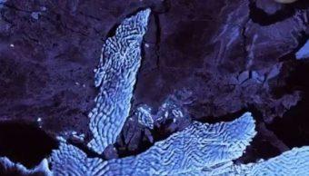 Foto Revelan ruptura de iceberg de la Antártida Occidental