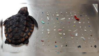 Muere un tortuga bebé que ingirió 104 piezas de plástico, 6 octubre 2019