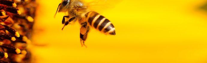 Foto: abejas ser vivo más importante del planeta. 4 Noviembre 2019