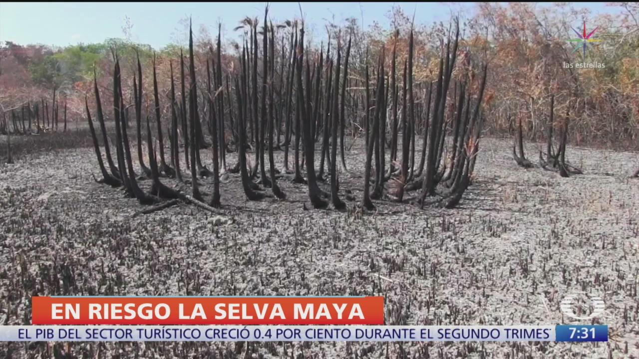 La selva maya en riesgo