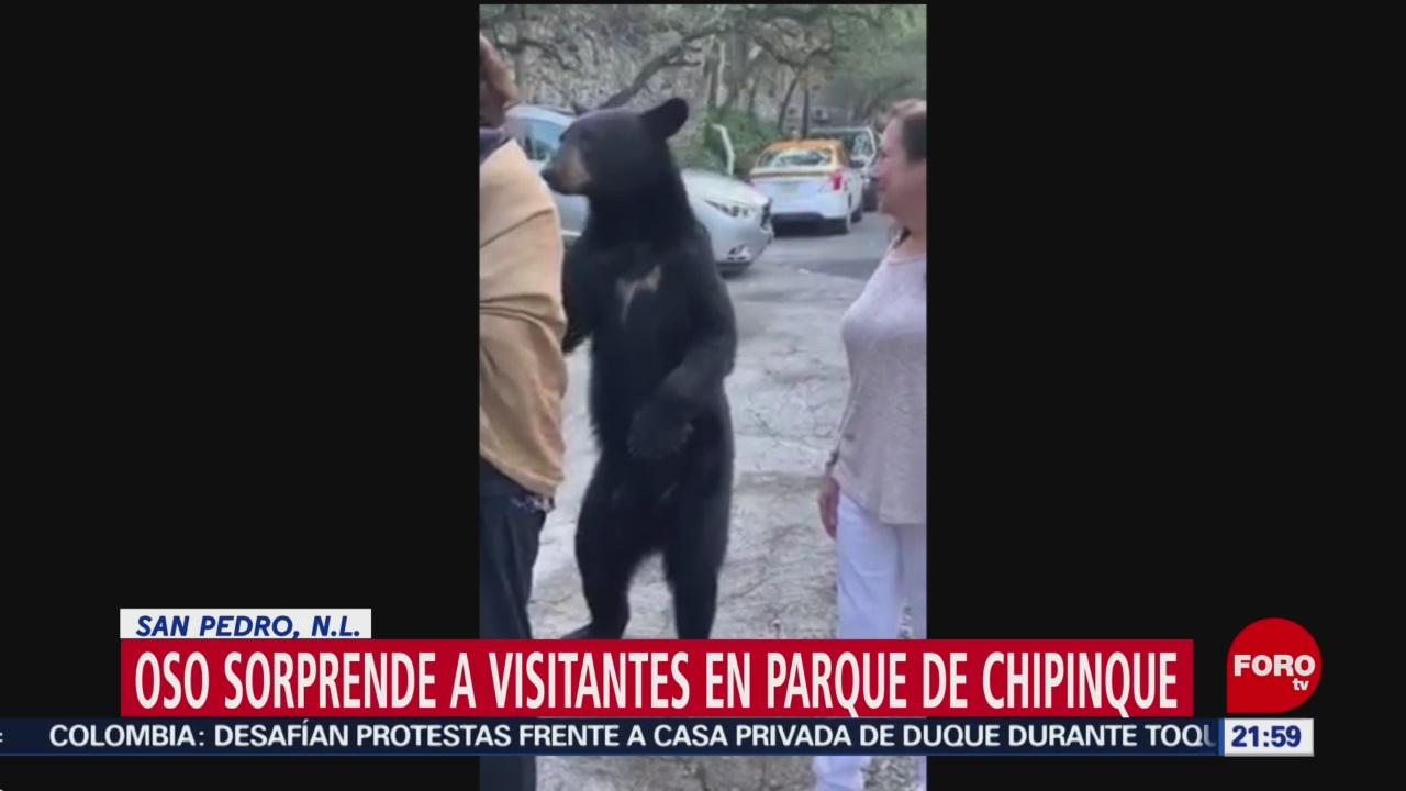 FOTO: Video Oso sorprende visitantes parque Nuevo León,