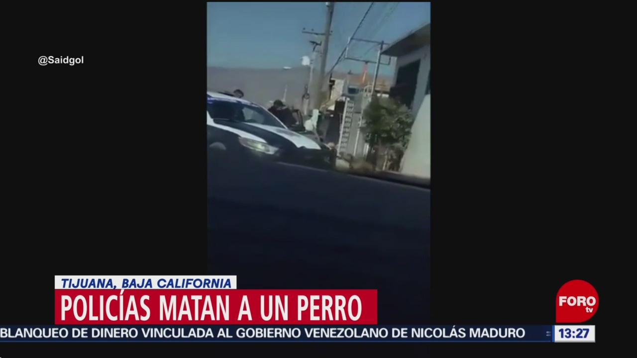FOTO: Policías de Tijuana matan a perro que estaba amarrado, 17 noviembre 2019