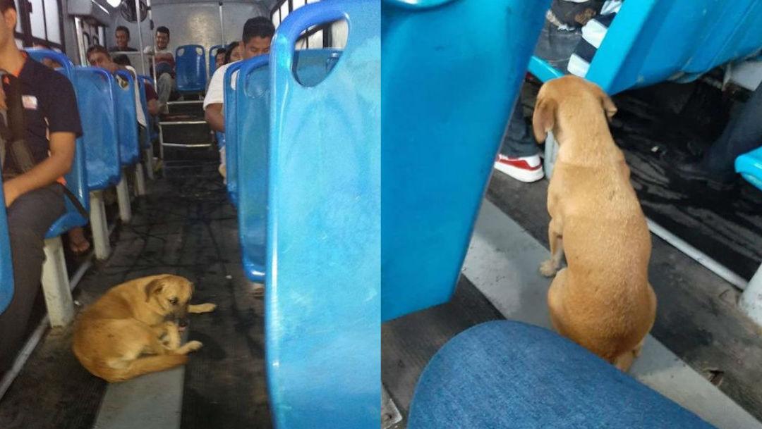 Foto Chofer de transporte dio asilo a perro debido a las intensas lluvias 20 diciembre 2019