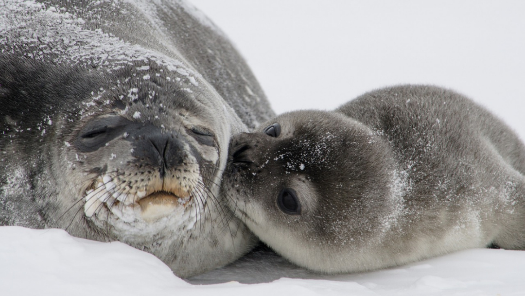 Resurgimiento de virus está matando a especies marinas en el Ártico