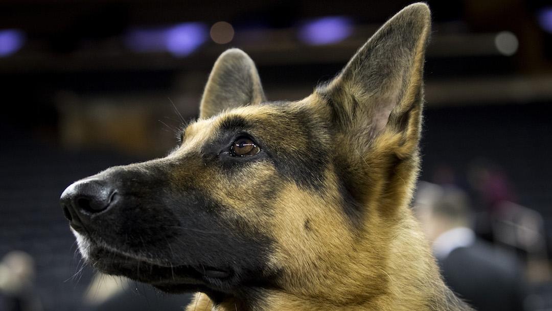Foto Descuartizó al perro de su ex pareja en venganza por ruptura amorosa 27 diciembre 2019