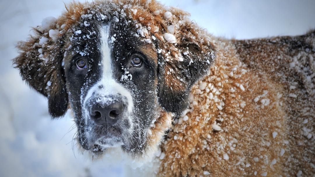 Tu auto podría ser guarida de animales cuando hace frío