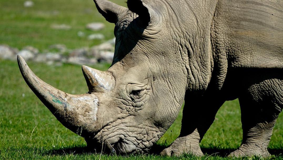 Más de 470 especies desaparecieron del planeta en esta década