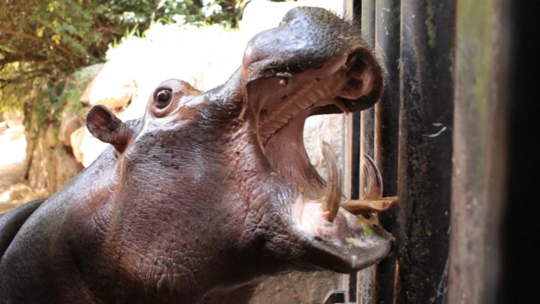Personas se unen y compran zoológico para salvar a sus animales, 22 diciembre 2019