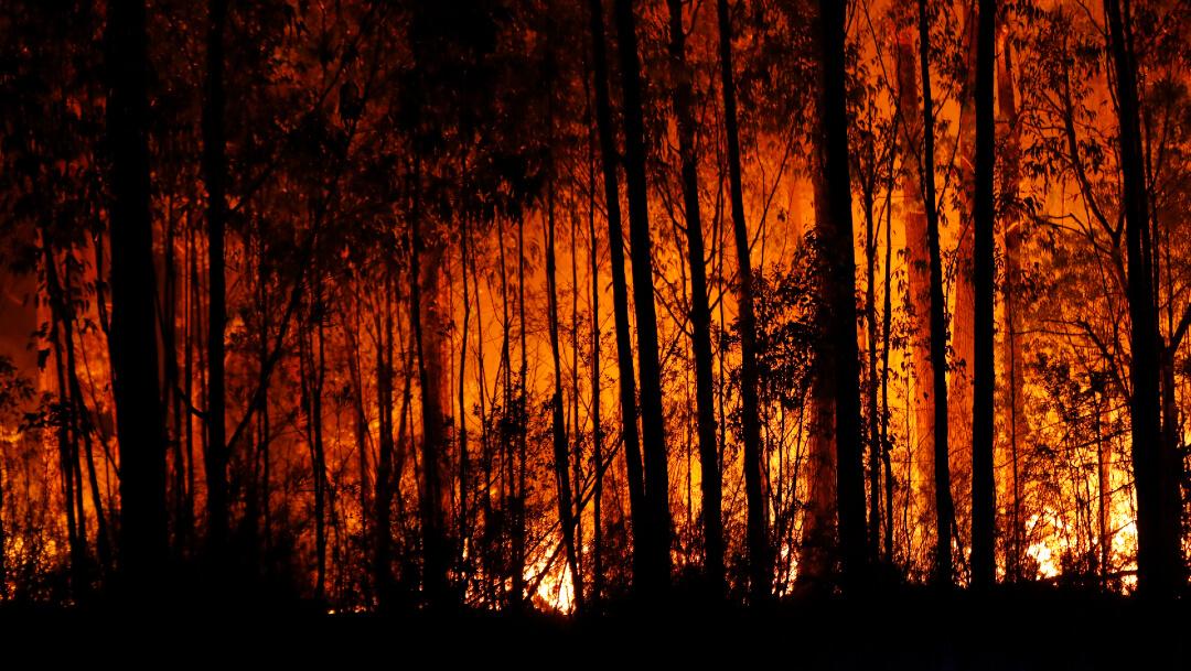 Más de 480 millones de animales muertos por incendios en Australia, 3 de enero de 2020, (Getty Images, archivo)