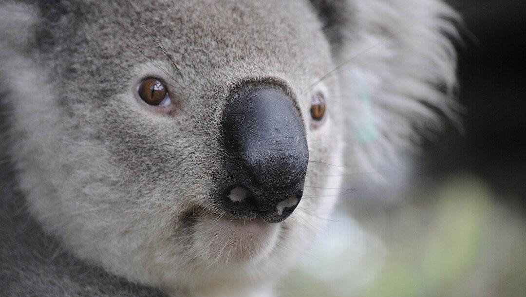 Lluvias en Australia apagan 32 de los 120 focos de incendio