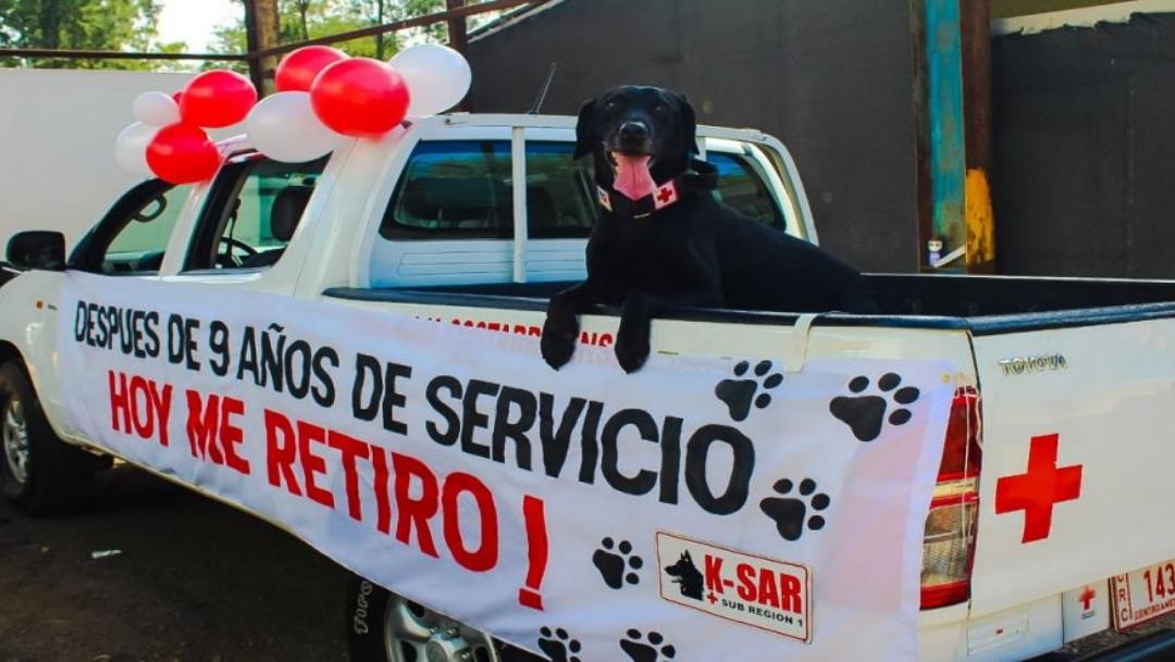 Perrito se jubila de Cruz Roja tras nueve años de servicio